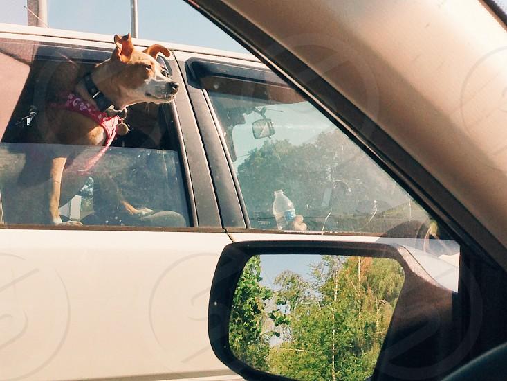 Dog Car photo