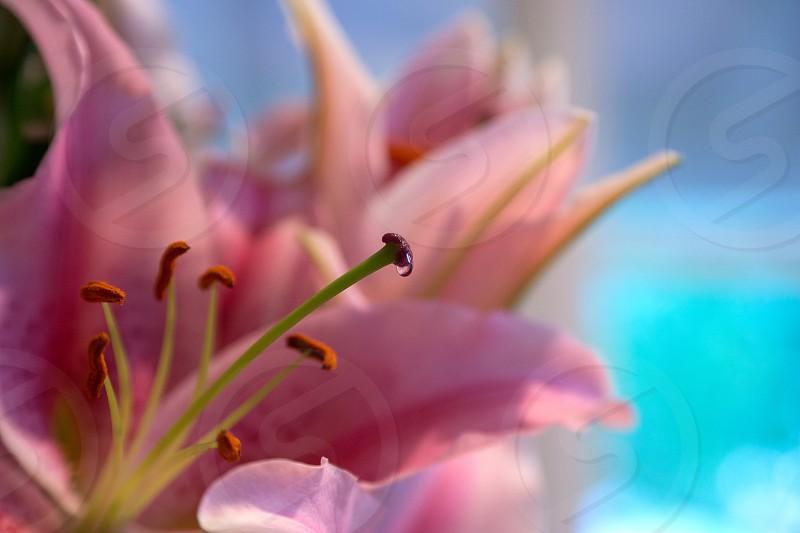 Secret Life of Flowers photo
