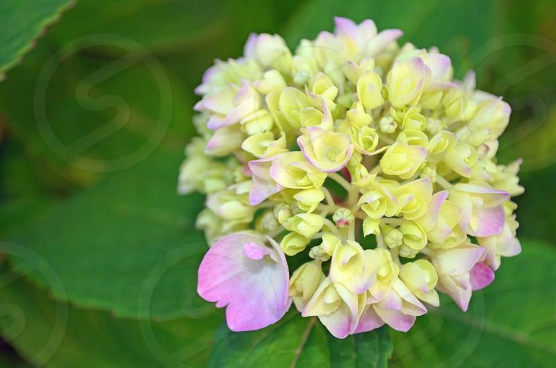 flowers & green leafs photo