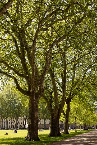 BRISTOL UK - MAY 14 : View of Queen's Park in Bristol on May 14 2019. Unidentified people photo