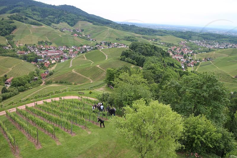 A group of people come to visit Vineyard Destination Landscape photo