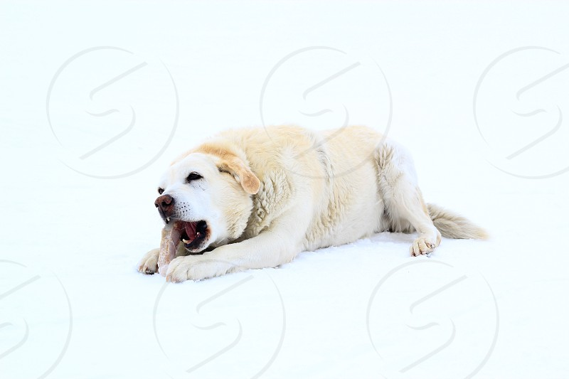 brown and white short haired medium breed dog photo
