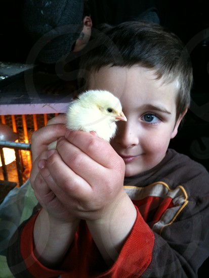 boy with a chick photo
