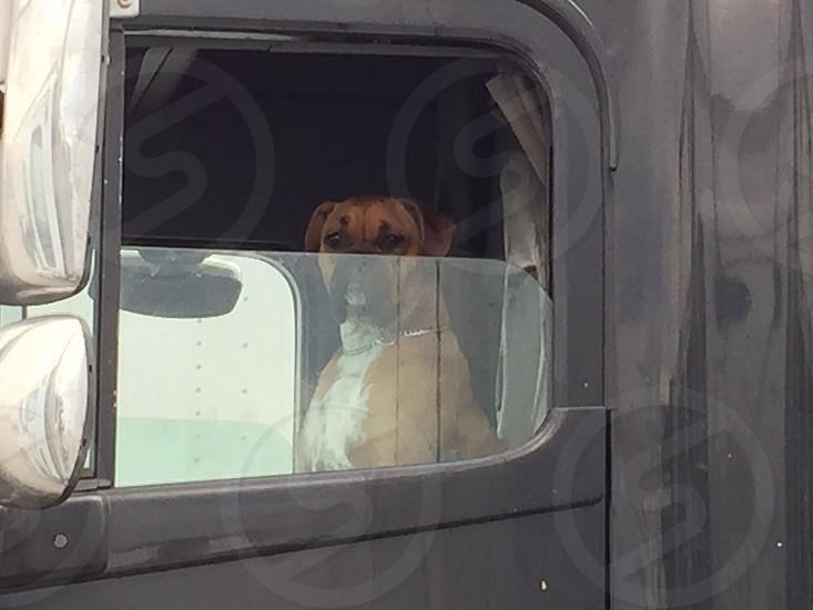 Big Dog Trucker photo