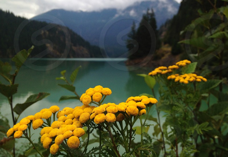 yellow flower on mountain side photography photo