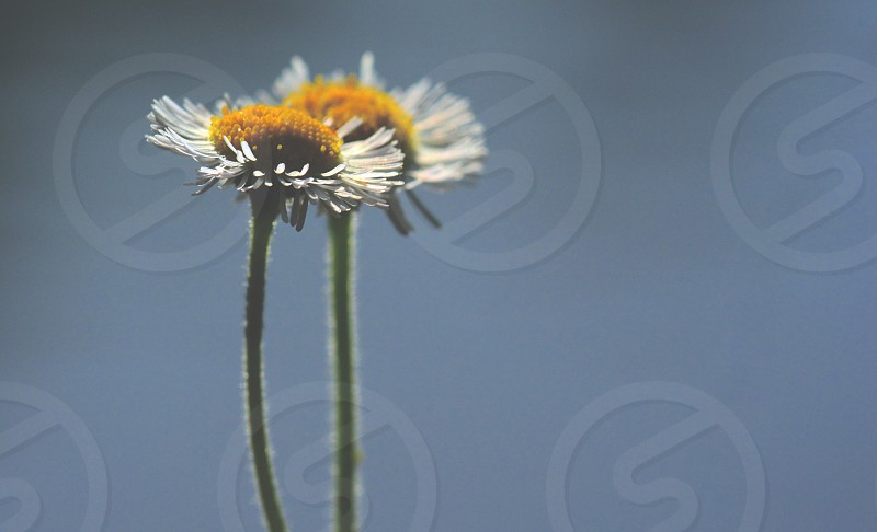 white petaled flower close up photography at photo