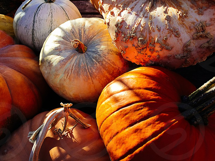 Seasonal Fall Pumpkins photo