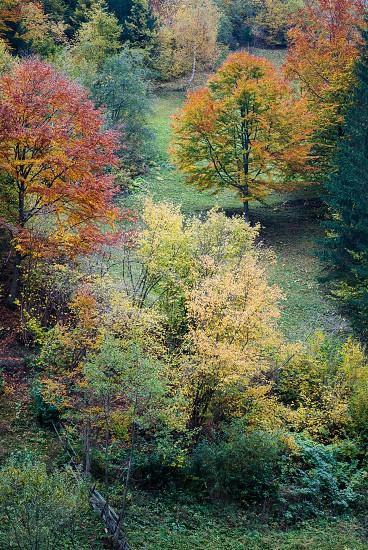 Fall Season photo