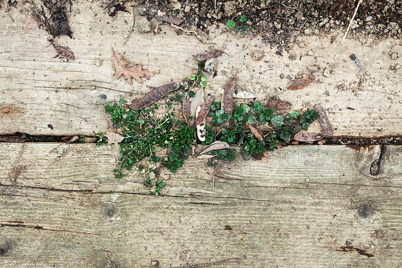 Texture of old dirty planks and some green plant in between. photo