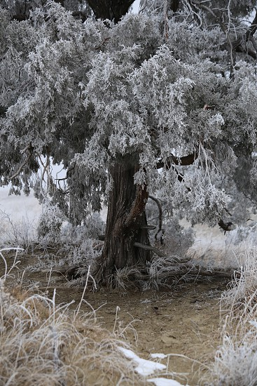 Frost tree winter North Dakota hoar frost photo