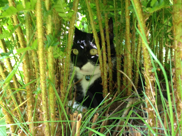 Cat hiding in the garden photo