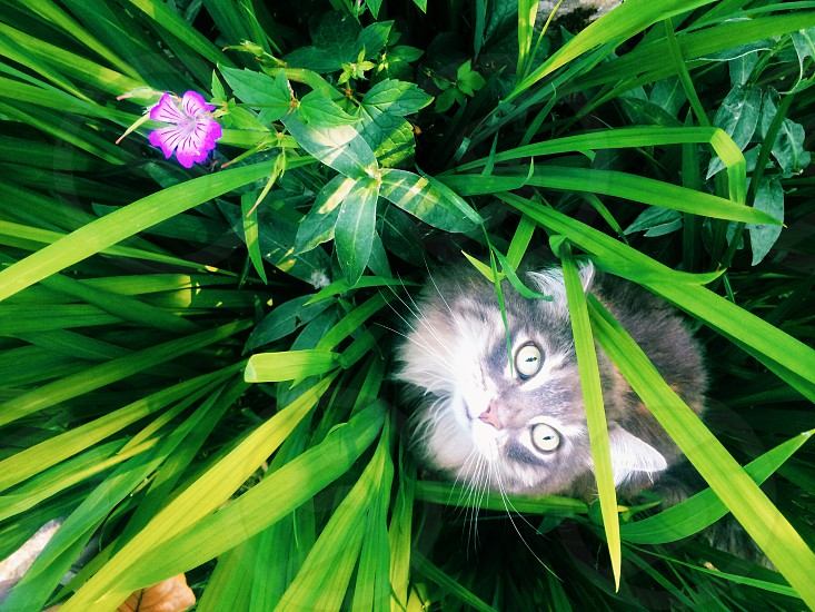 grey calico cat hiding on green plant photo