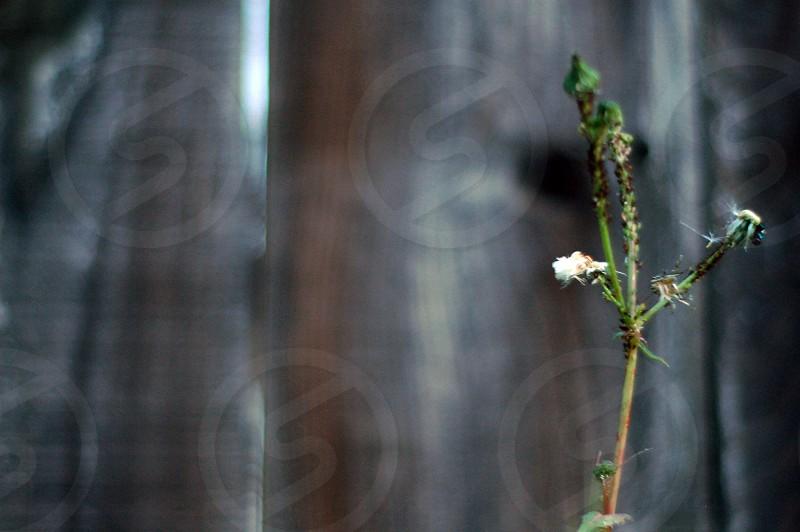 white flowering plant photo