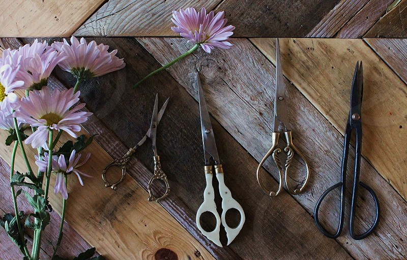 Fresh flowers and an ornate collection of scissors & shears for snipping. photo