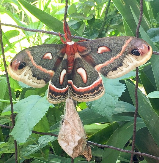 Giant moth nature awakening photo