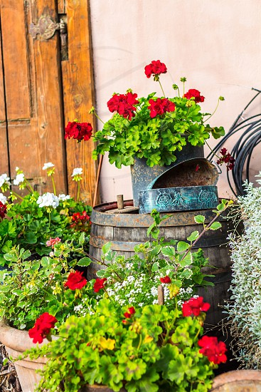 Garden gardening flowers red decoration photo