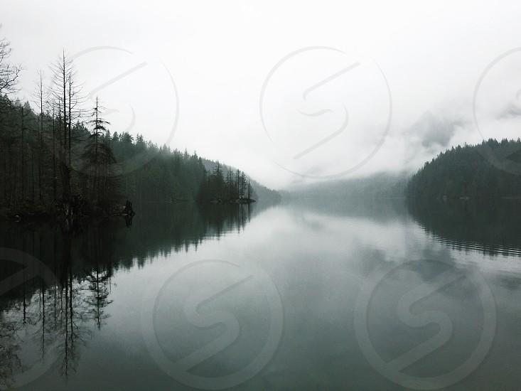 fogy trees near river photo