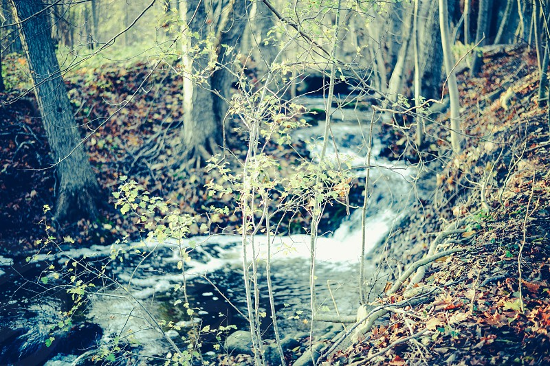 running water on stream at woods photo