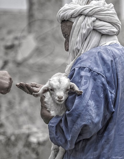 person holding sheep and begging for coin photo