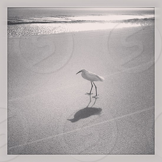 white bird on beach photo