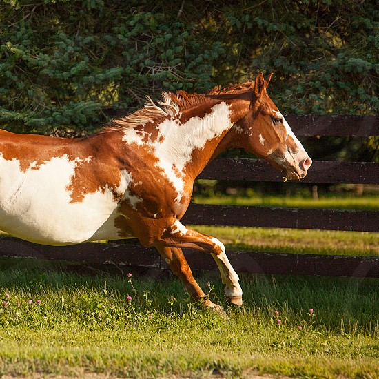 Galloping in the summer sun. photo