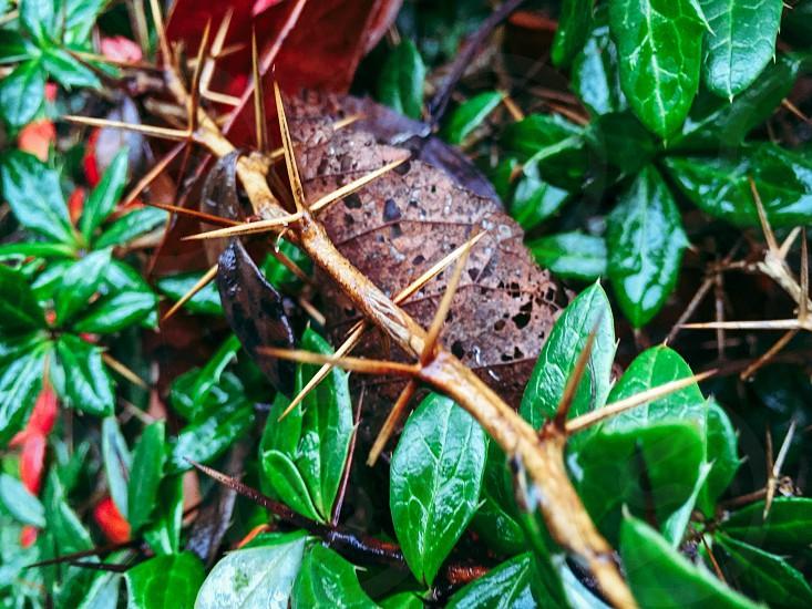 thorny plant stem photo