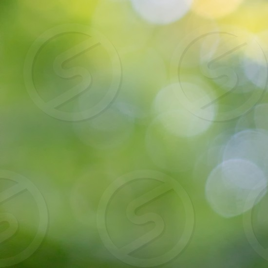 Green trees. Blurred summer background with bokeh effect. Creative colorful layout photo