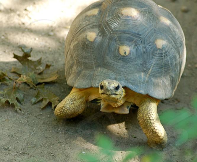 brown and yellow tortoise photo