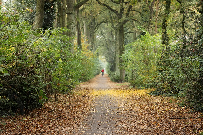 Autumn scene with person wearing a red jeacket in the background. photo