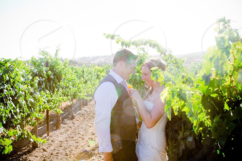newlyweds standing in the middle of a grape plantation during daytime photo
