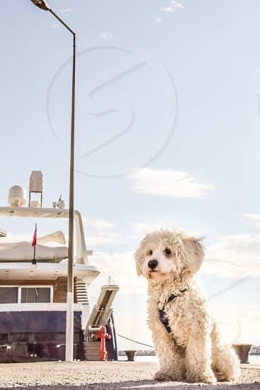 White Shaggy Dog With At The Dock photo