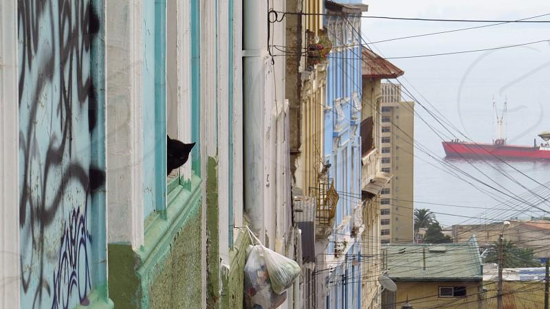 Chile Valparaíso Cerro de la Concepción Cat Graffiti photo