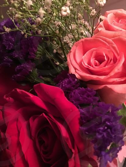 Rosesredpinkpurple photo