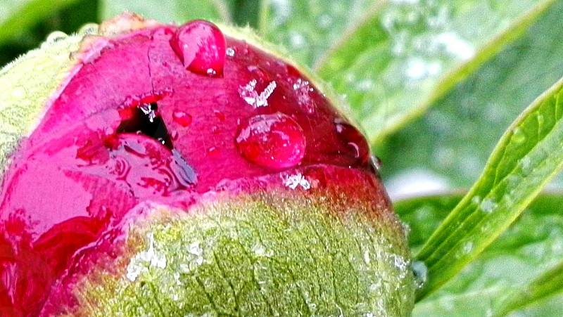 spring flower with water drops photo