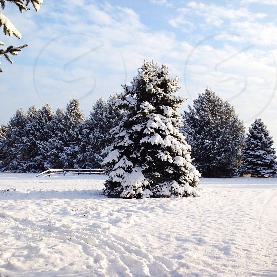 green tree cover by snow view photo
