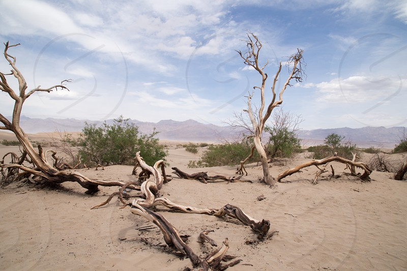Mesquite Flat Sand Dunes at Death Valley National Park in California  photo
