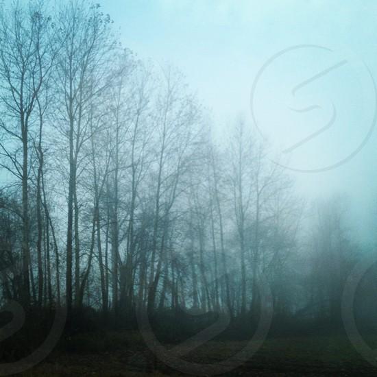 fog trees travel photo
