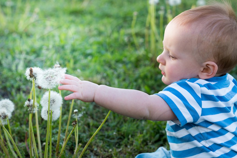 baby in blue and white stripe shirt touching dandelion during daytime photo
