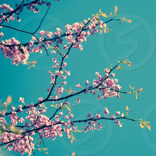 pink flower and blue sky photo