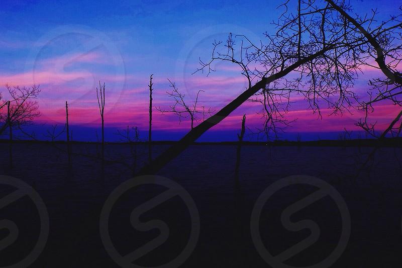 leafless tree on silhouette photo photo
