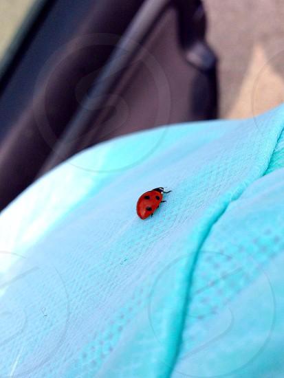 Ladybug on a green jacket photo