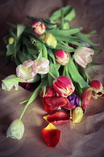 Flowers flower decoration dead death dry floor paper tulip tulips art abstract nature colorful colors multiple laying dried leafs leaf background thirst thirsty poor apart falling apart photo