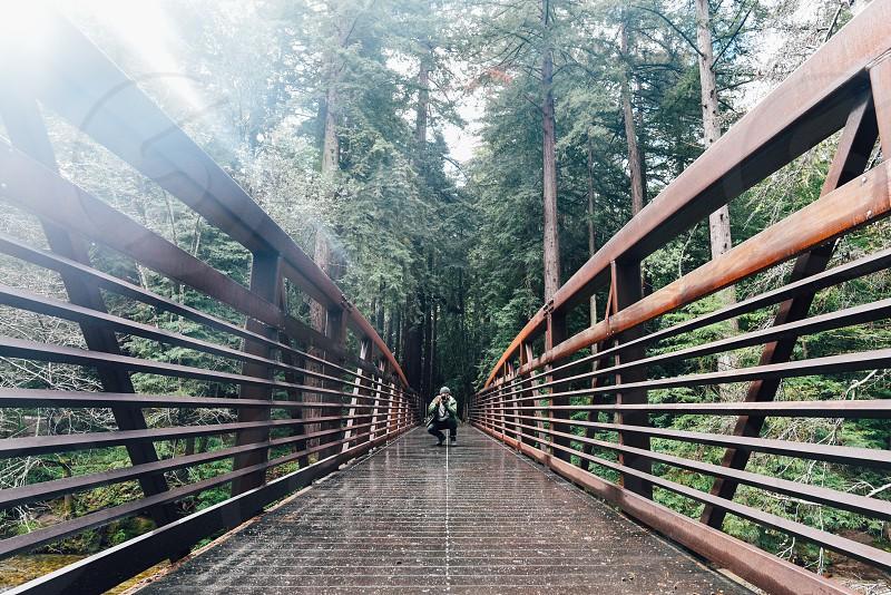 bridge symmetry photographer photograph lines forest photo
