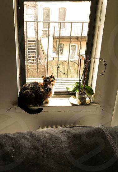 Cozy cat window radiant heat cozy photo
