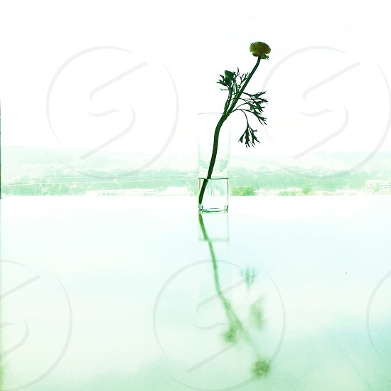 green flower on glass vase photo