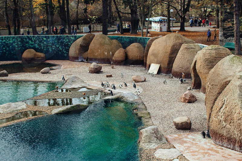 Penguins in Wroclaw zoo photo