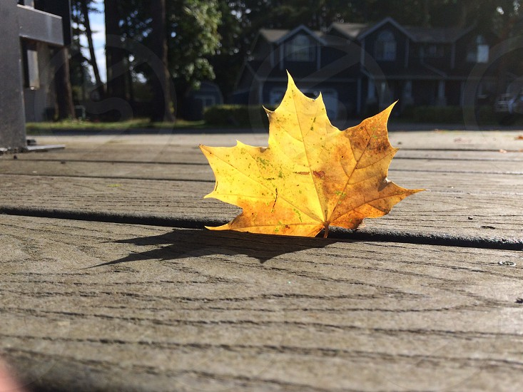 Stand up Leaf photo