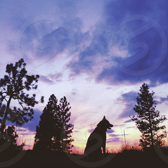 dog in silhouette against sunset photo