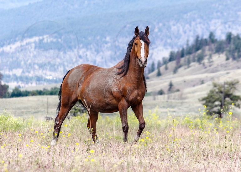 Horse posing photo