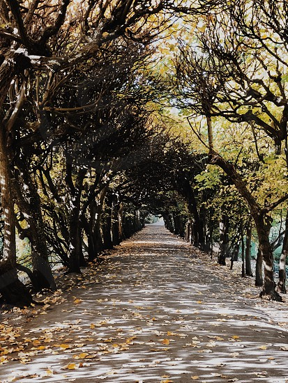 Autumn #2 photo